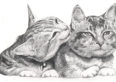 catslicking