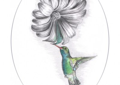 touchofcolourhummingbird-724x1024